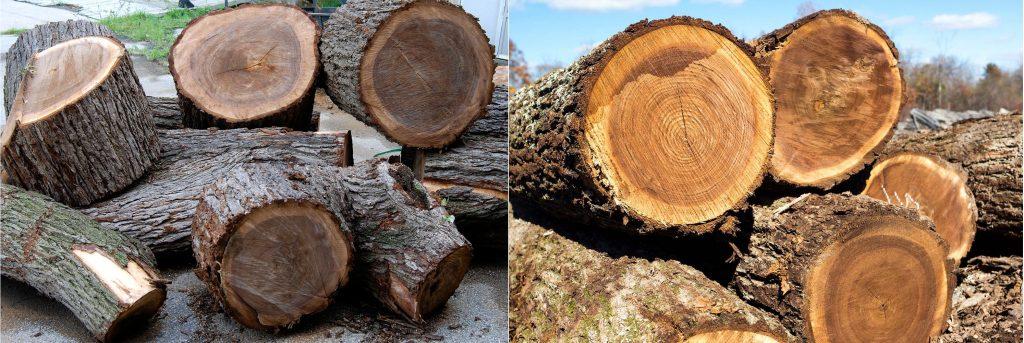 Phân biệt các loại gỗ óc chó